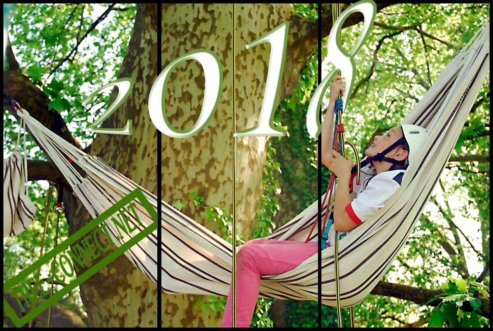 grimpe d'arbres (1).jpg